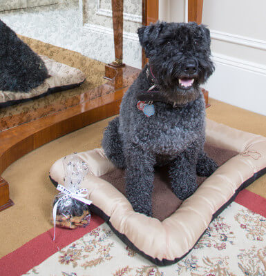 A pet-friendly hotel, The Sherry pampers pets with dog beds, food bowls and puppy treats.