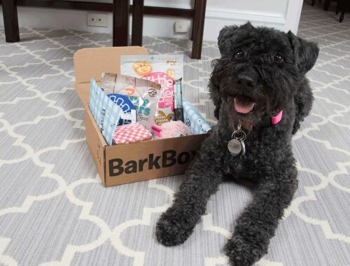 Lap of Luxury Pooch Package featuring Barkbox